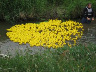 Duck Race 2016 - just after the start