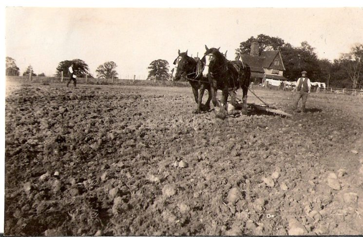 Harrowing and sowing at Top Farm, South Park. Horns Lodge in background